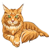 dessin maine coon 3